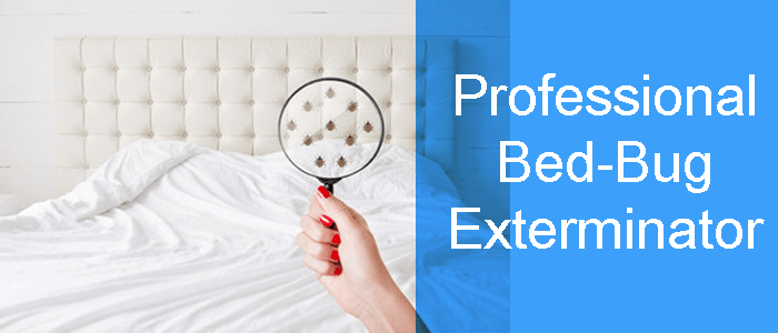 Professional Bed Bug Exterminator
